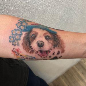 Cute puppy portrait.