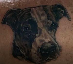 COLOUR DOG PORTRAIT