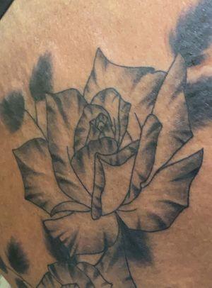Black ink tiger roses!