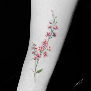 Instagram: @rusty_hst Small larkspur flower 🌸 #flower #floral #illustrative #larkspur