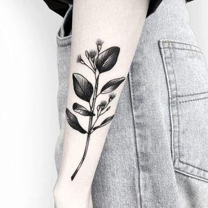 Eucalyptus branch done by Deanna Lee. . . . @hideetattoo . . . #deannalee #hideetattoo #melbournetattoo #melbournetattooartist #melbournetattooer #femaletattooartist #koreantattooartist #eucalyptus #northmelbournetattoo #vicmarkettattoo #armtattoo #blackwork #finelinetattoo #flowertattoo #floraltattoo