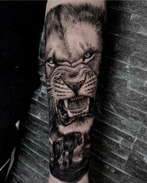 Blue eyed lion