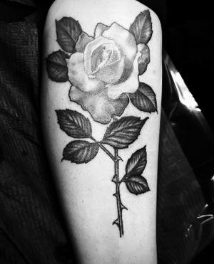 White rose with dark petals.