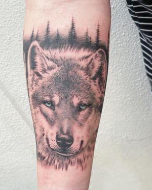Beautiful wolf 🐺