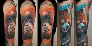 healed orangutang and red panda
