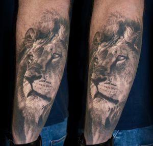 healed lion