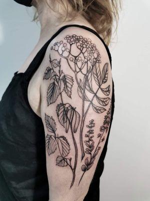 #plants #loveplants #inlovewithplants #birthflowers #amsterdam #inkedartspace #botanical #leafs #zinaink