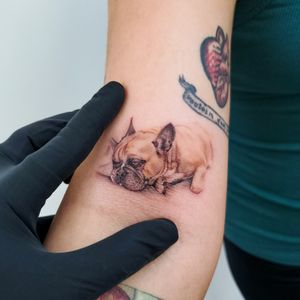 Dog portrait #dogtattoo #realism #microrealism #tattoosbysherri #tattooideas #inkspiration