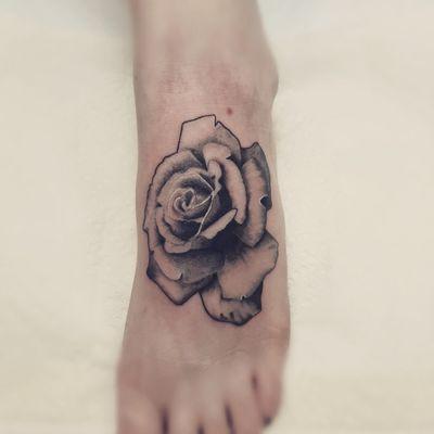 #rose #roses #realism #flower #botanical #plant #flora