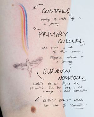• eurasian woodcock • EURASIAN WOODCOCK world's slowest flying bird (8 km/h). Slow but sure and still manage to reach destination. CONTRAILS analogy of trails left on a journey. PRIMARY COLOURS can create a lot of other colours. Different colours on a journey.