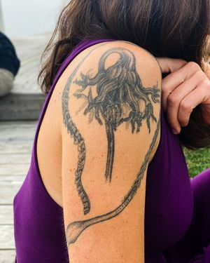 Sea pen from the Ernest Haeckle book.  Healed over 5 years.