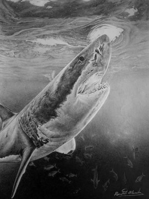 Shark done with graphite pencils