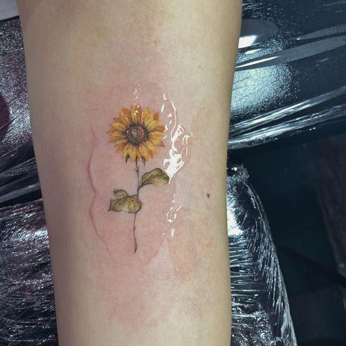 single needle colour sunflower