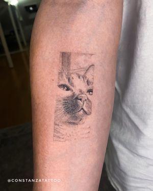 Portrail cat 8 cms 3 hours
