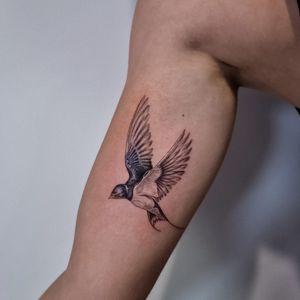 Swallow 🐦 #fineline #singleneedle #bird