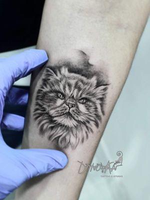 Gato persa #mascota #gato #tatuajesgatos