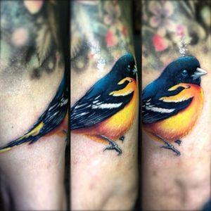 #realistic #bird #finch #ErisQesari