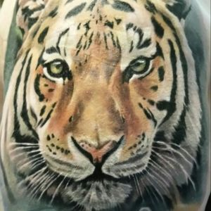 Tiger by Jordan Croke #jordancroke #color #colour #colorrealism #nature #tiger #endangered #cats #wildcats #secondskin #uktattoo