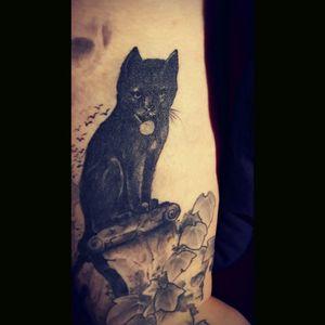 #blackcat #ivy