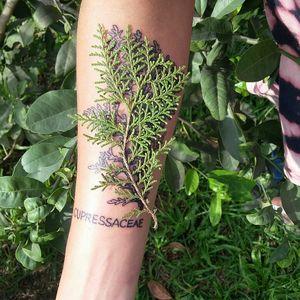 Botânica arte por Adrian Andrade #tattooartist #botanical #botanicaltattoo #plants  #linewok #tatuagembrasil