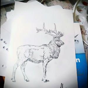 #pencildrawing #deer #blackAndWhite