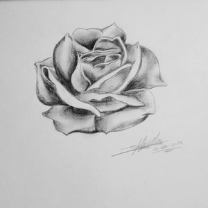 #rose #ideas #drawing #blackAndWhite #shadow #cute Made by me 🎀