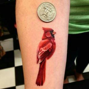 #small #cardinal