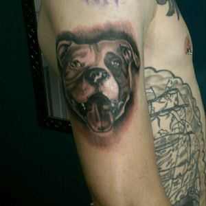 Tattoo by Renan Slim #tattoo #tattoos #ink #inked #pitbull #pitbulltattoo #tattooist #tattooer #tattooartist #blackngrey #blackngreytattoo