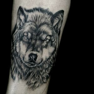 Wolf black and gray Tattoo Japa indi From :brazil sp