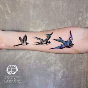 By #koraykaragozler #watercolor #swallow #flying #watercolortattoo #birds