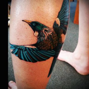 #Tui, not finished yet. #NZ
