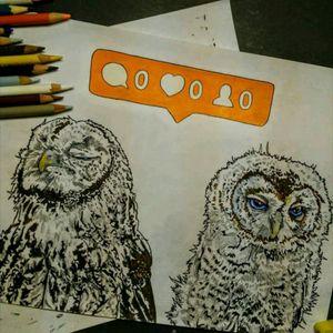 No love owls