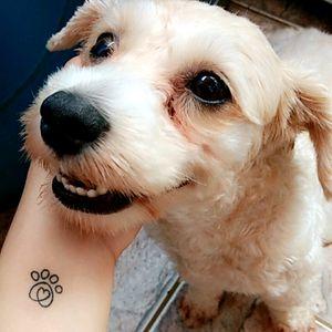 #dog #paw #dogpaw