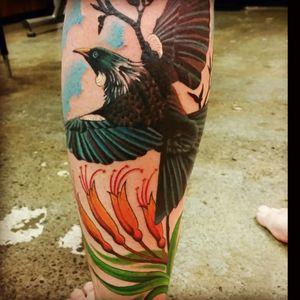 #Tui #NZ #bird