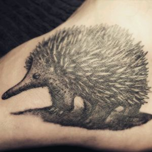 Realism tattoo of an echidna I recently did on the foot #echidna #animaltattoo #foottattoo #realism #tattoo #blackandgrey #blackandgreytattoo #cleantattoos
