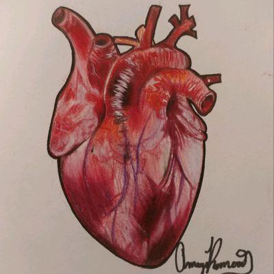 #heart #realism #anatomy