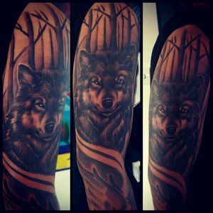 🔥🔥 #wolf  #newzealand