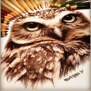 Amazing pencil drawing of an owl. Love the intensity! #owltattoo #drawing