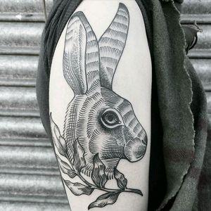 Yesss #hare #rabbit #whiterabbit #bicep #want #blackandwhite