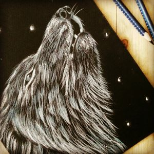 #wolf #whitewolf #draw #drawing #pastelpencils #night #howlinwolf #howlingwolf #howling