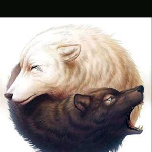 Yin Yang Lobos.