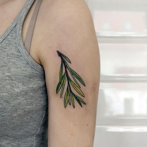 #colortattoo #PlantTattoo #botanical
