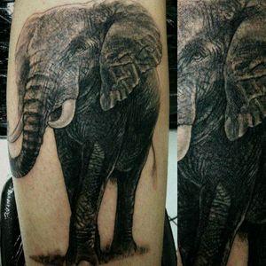 #elephanttattoo