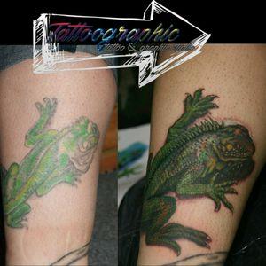 lizard coverup