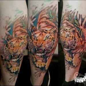 Tiger By Ela #tattoobanana #tattoo #tattoos #tatts #bodyart #inked #thurles #ink #tattoolovers #tatuaze #worldfamousink #sabretattoosupplies #irelandtattoostudio #tattooprime #intenze #tigertattoo #colortattoo