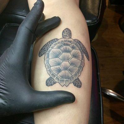 Turtle #blackandgrey #turtle #nature #animal #SouthBeach #inkeeze