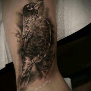 #robin #bird #wildlife #blackandgrey #realism