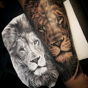 Lion tattoo black and gray @alexandrerodrigues_t2 #lion #tattoooftheday #liontattoo #artoftheday #hoorn #realistictattoo #realism