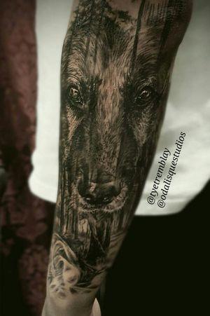 #germanshepherd #dog #dogportrait #wildlife #animal #blackandgrey #realism