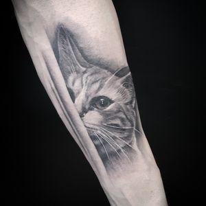 Cat for frang ize